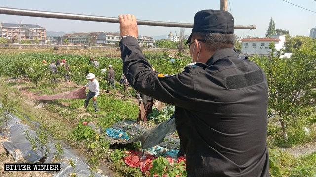Numerosos enrejados de vegetales fueron destruidos en el condado de Cangnan.